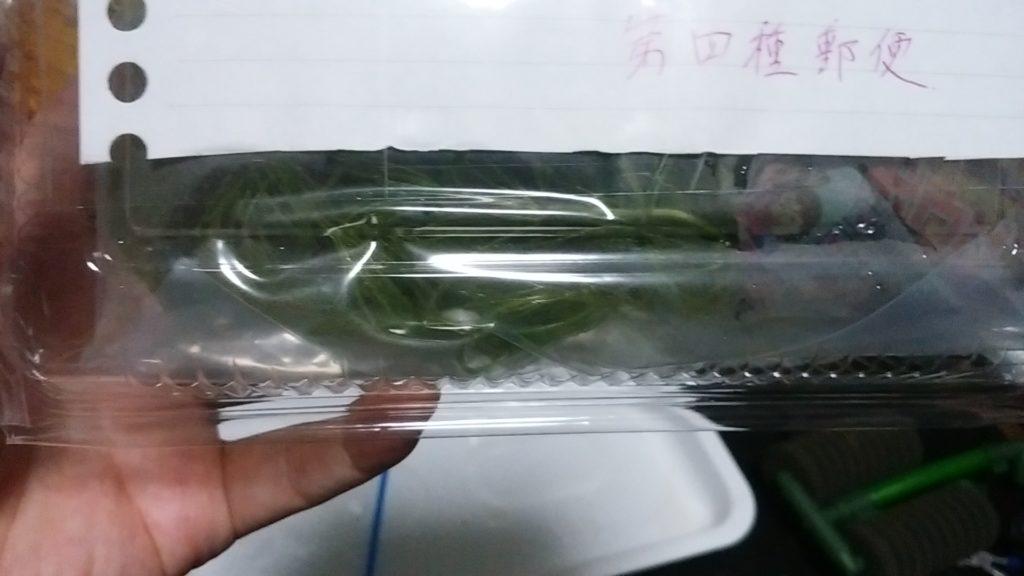 植物種子等郵便物でマツモを発送