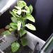アクアリウムで行う水耕栽培が富栄養対策におススメ